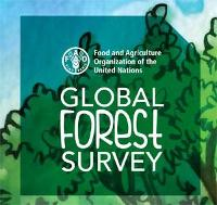 Preparing for the Global Forest Survey
