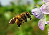 India's Jenu Kuruba forest honey industry sticks to tradition – study