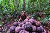 Harvesting both timber and Brazil nuts in Peru's Amazon forests: Can they coexist?
