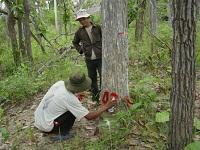 "Vietnam tries ""community forestry"" model to protect forests"