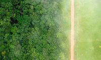 Amazon condom factory: a sustainable way to profit from Brazil's forests