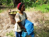 Non-timber forest products: the way forward for the rural woman?
