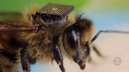 NWFP Update Issue 7: Trees and bees