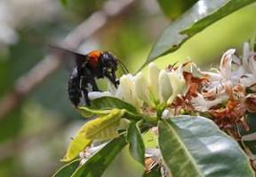 Bees are bellwethers for the healthy agricultural ecosystems they help create