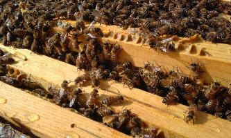 TECA moderated discussion: Aspects of honey adulteration