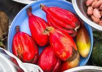 Wild nourishment:Forest foods boost local diets in Zambia