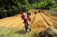 How forests improve kids' diets