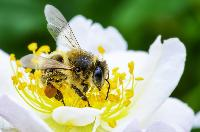 World Bee Day: Why we need bees for a nutritious future